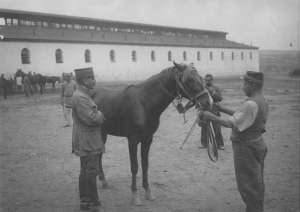 Γάλλοι στρατιώτες φροντίζουν άρρωστα άλογα, 1916 (γαλλικό υπουργείο Πολιτισμού)